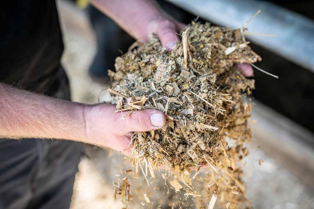 Futter für die Black Angus Rinder auf dem Hof Holtrup in Senden
